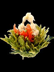 Sun Shine Blossom Tea, 10 bulb pack