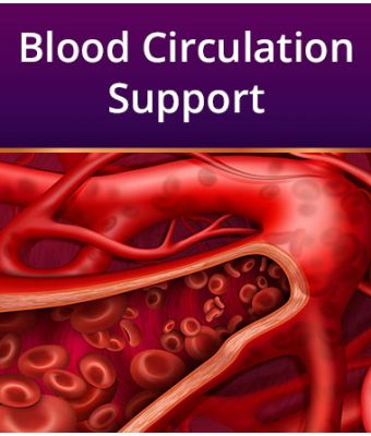 Blood Circulation Support
