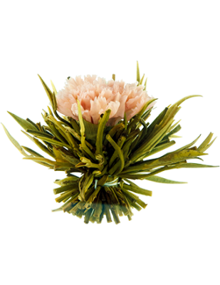 Lychee Carnation Blossom Tea, 10 bulb pack