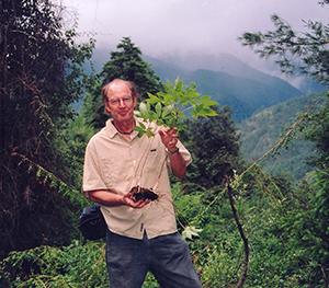 Ron Picked Wild Ginseng