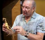 Preparing Fresh Wild Ginseng for Heaven Drops video