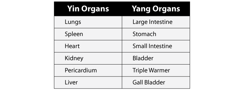 Yin Yang Organs