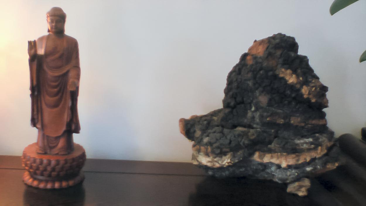 Chaga mushroom altar