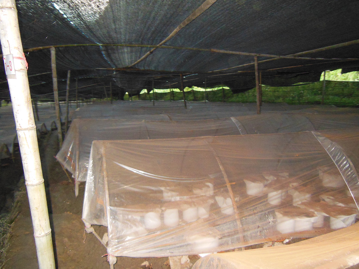 reishi-tent-4