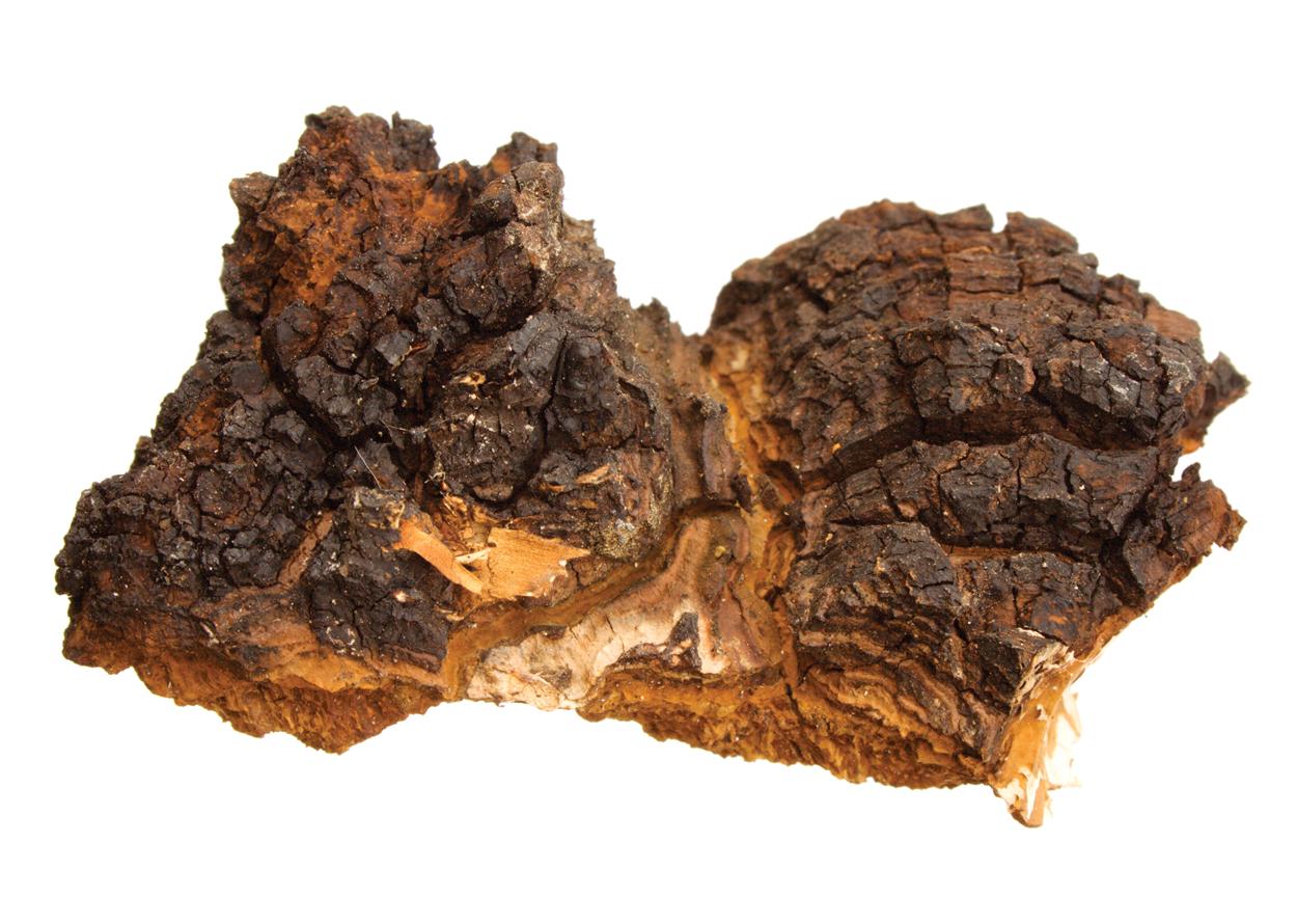 Chaga mushroom Chunk