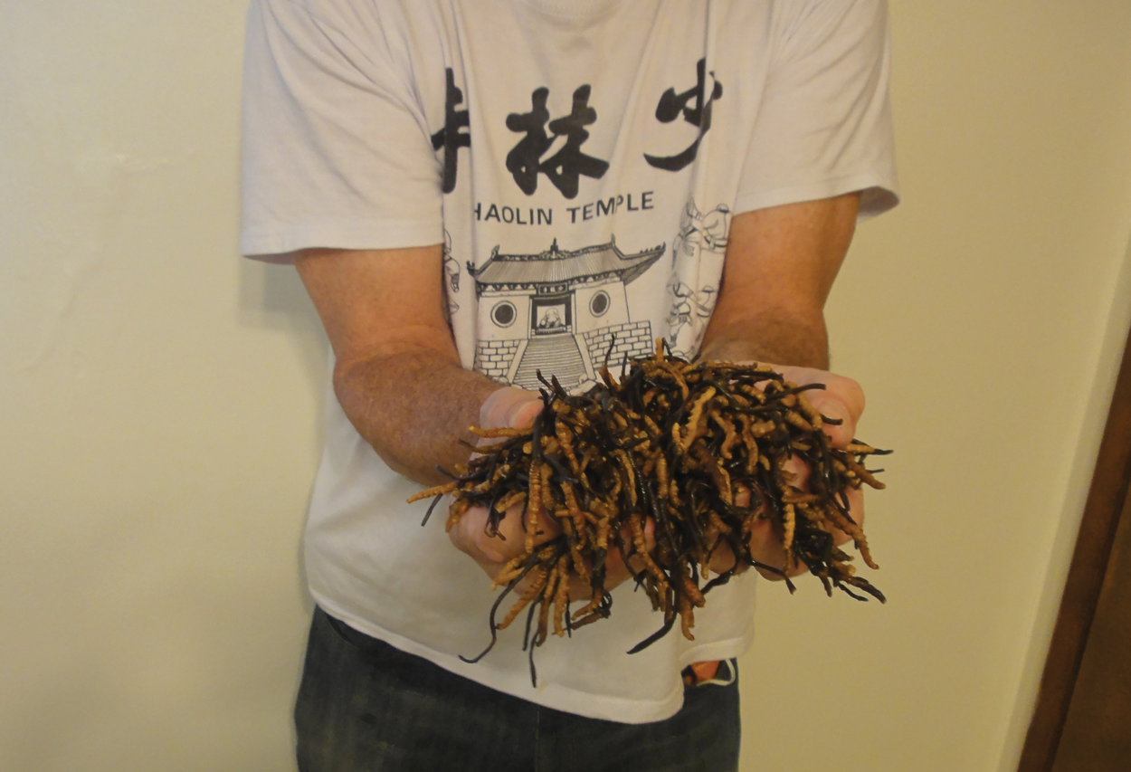 Ron Holds Freshly Collected Wild Cordyceps