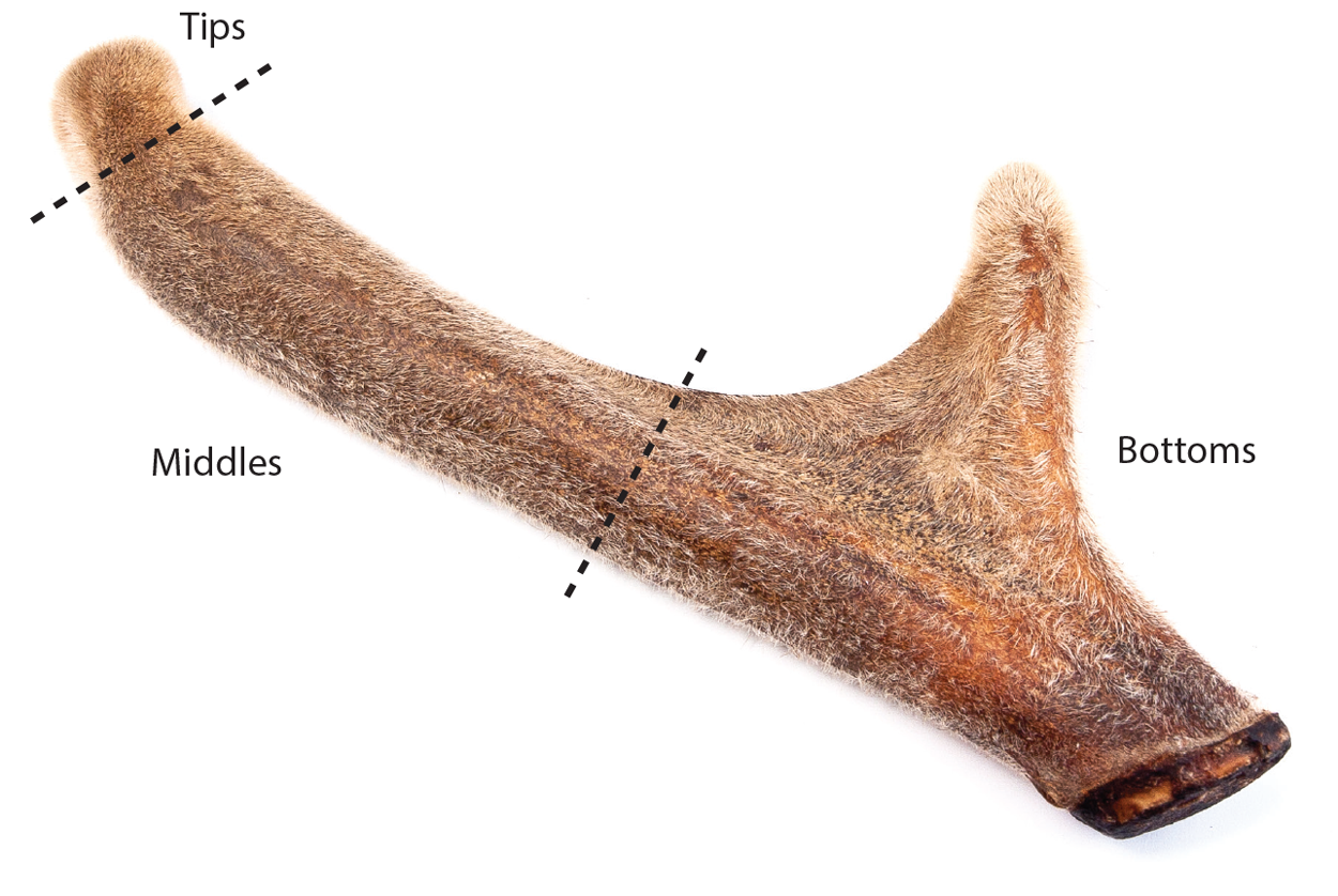 deer-antler-tip-diagram
