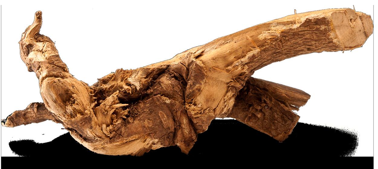 Eleuthero Root Chunk