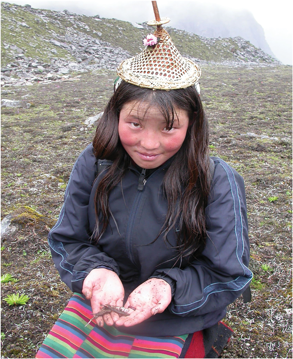 Mountain Girl Collects Cordyceps