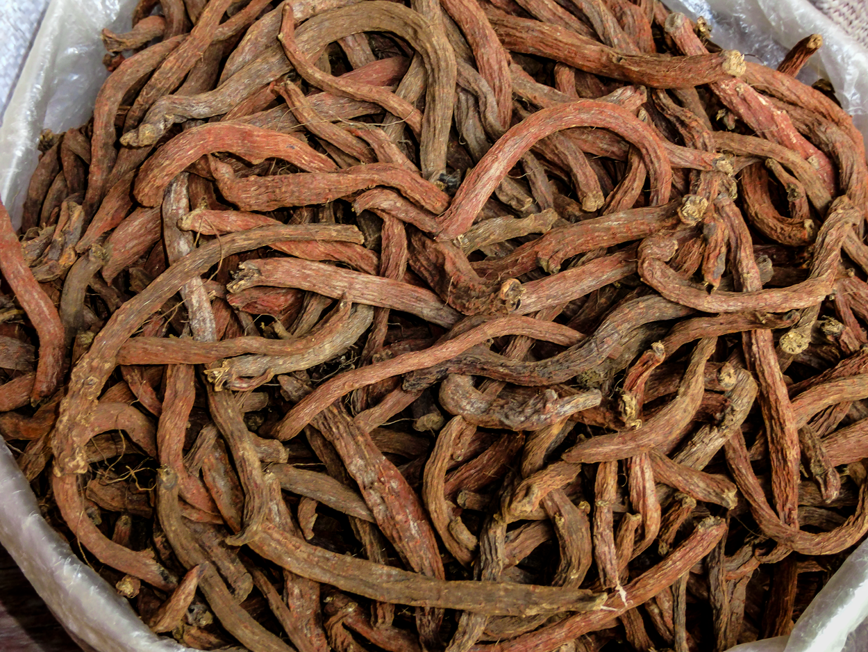 red salvia dried root