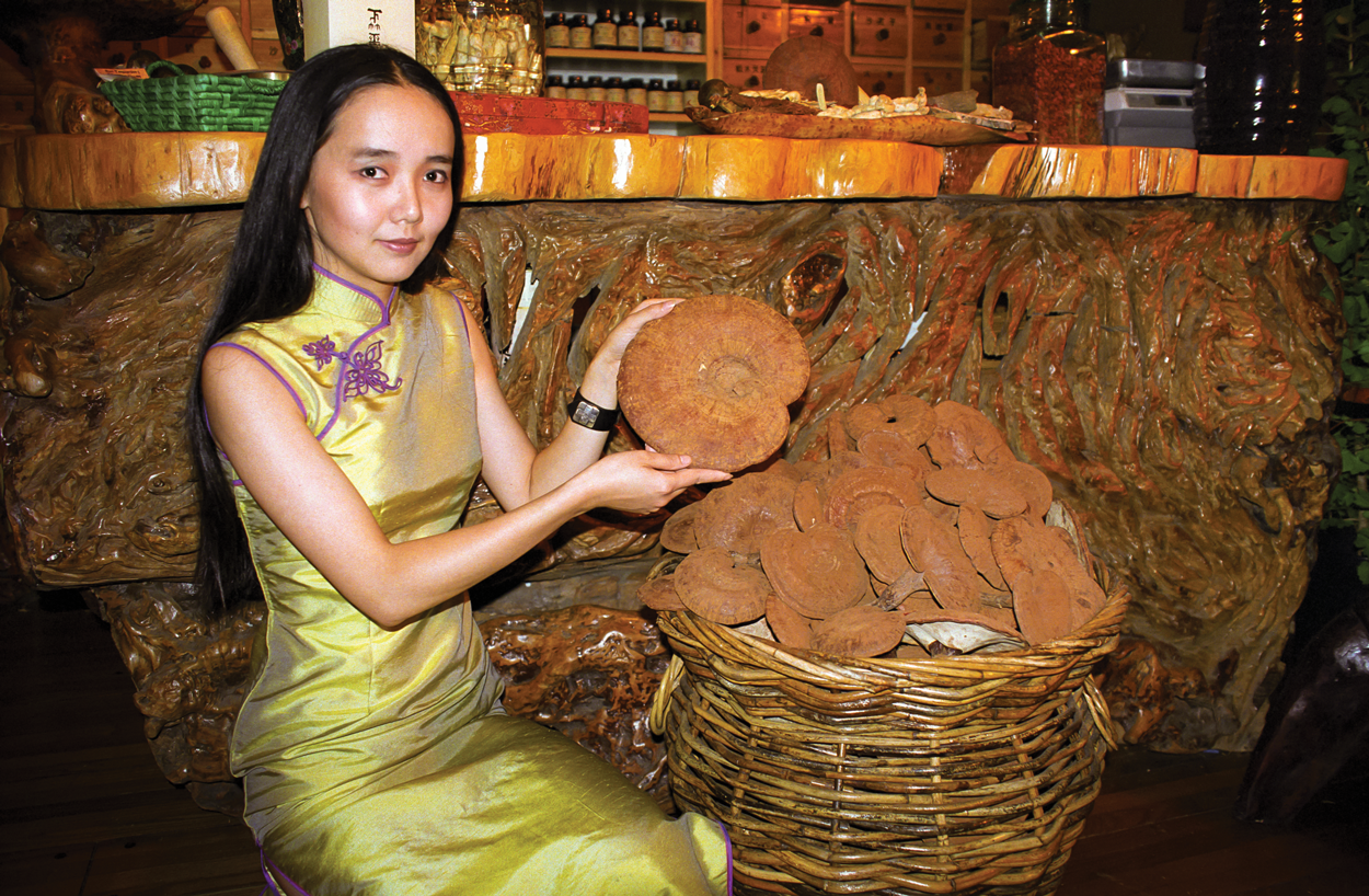 Yanlin Shows Dried Duanwood Reishi