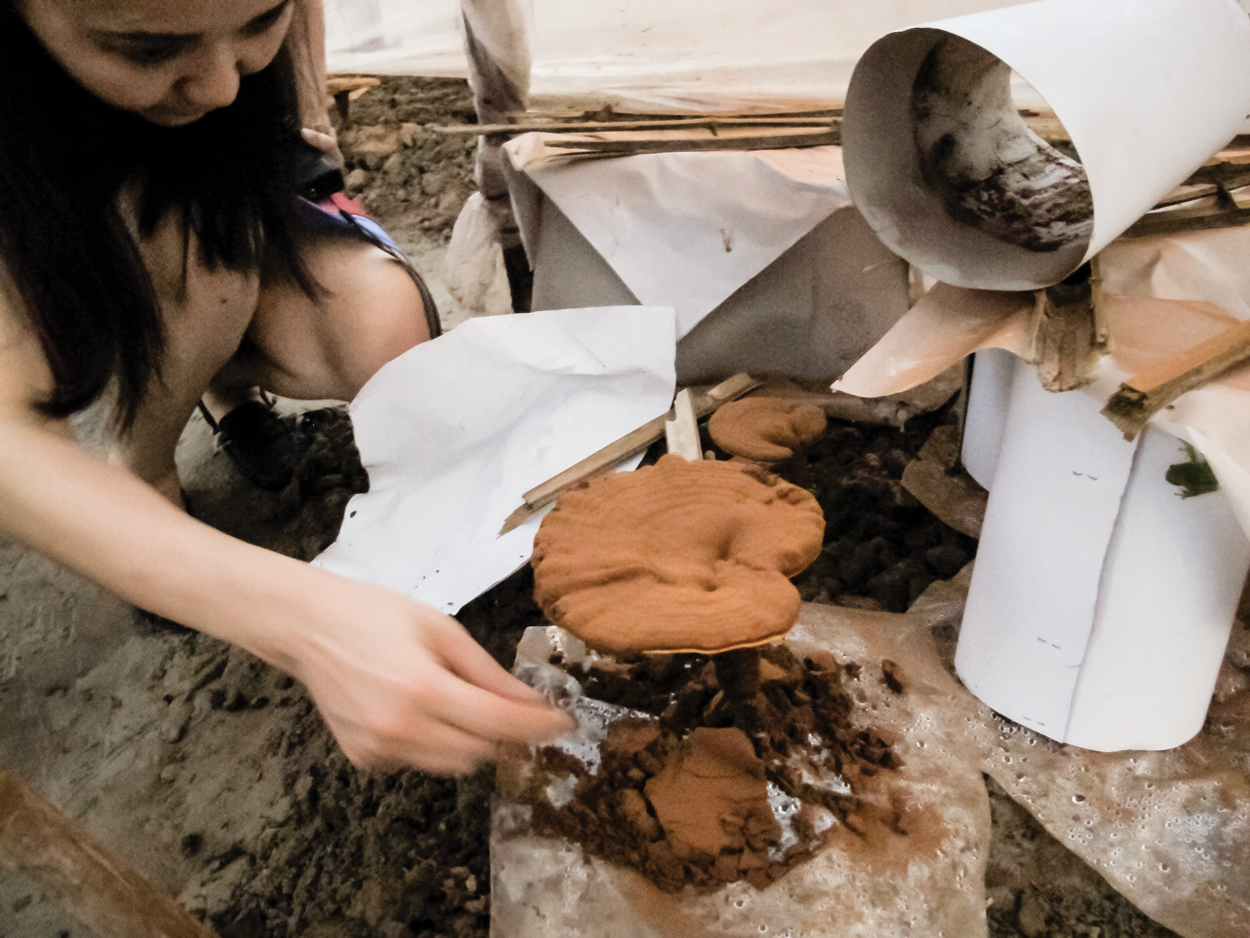 Yanlin Inspects Reishi Mushroom Producing Abundance Of Spores