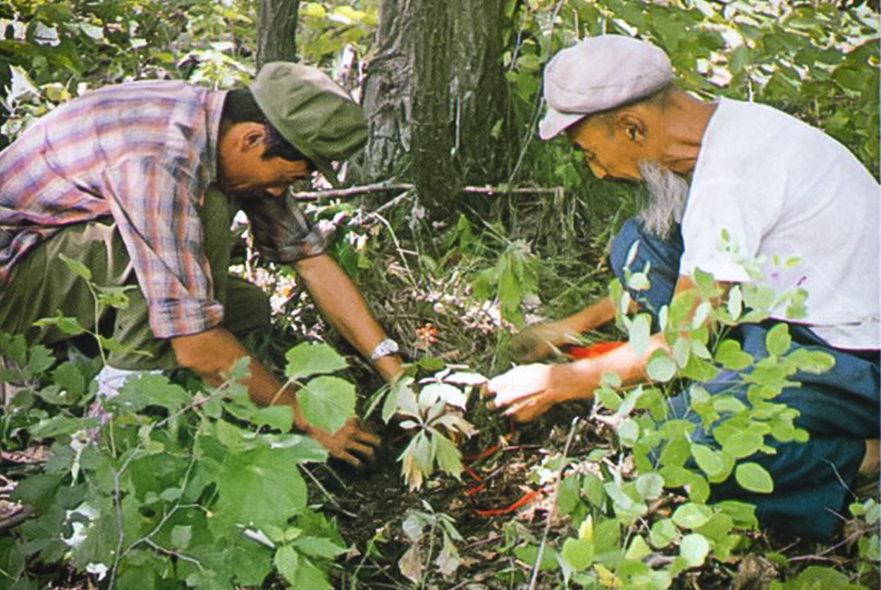 Wild ginseng collectors in China
